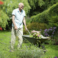 senior man pushing a wheelbarrow